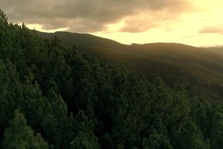 Bird's Eye View Of Pine Forest on Sunrise