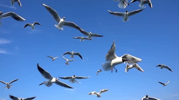 Bird Animal Seagulls Flying on Clear Blue Sky